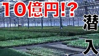 売上高10億円の苗農場に潜入!!