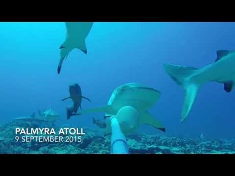 Palmyra Atoll BRUV 9 September 2015