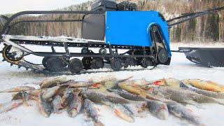 ПЛОТВА СОШЛА С УМА БЕШЕННЫЙ ЖОР Первая рыбалка с БАРБОСОМ часть 1