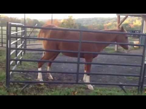Horse pees upon request