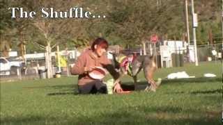 Disc Dogging With Mark Muir - San Diego Dog Training