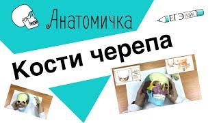 Кости черепа 💀 АНАТОМИЧКА с Сергеем Подковальниковым.