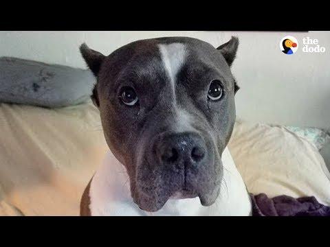 download Rescue Pittie Talks To Her Mom Nonstop | The Dodo