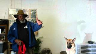 K9 Training Tacoma Humane Society Part 2