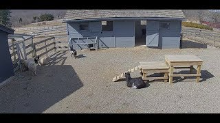 Farm Animals Relaxing | The Dodo Tranquil Tuesdays LIVE