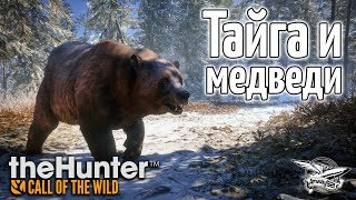 Стрим - theHunter Call of the Wild - Тайга и медведи - Новое DLC