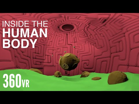 What Happens Inside Your Body? - VR 360°