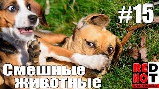 Смешные животные #15 Видео приколы с животными 2018