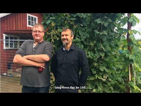 Ölbryggarna vill ha svensk humle