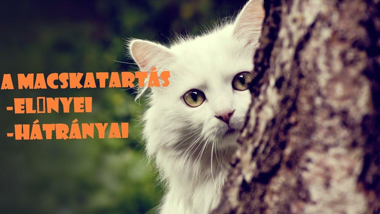 Több macska spot-on is elbukott a NÉBIH legújabb terméktesztjén - Nébih