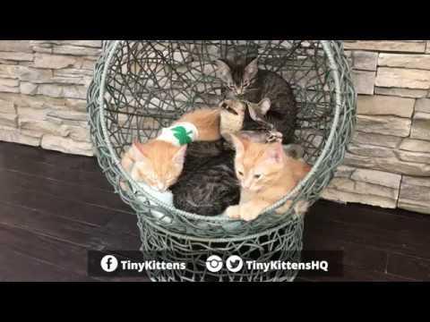 grandpa-mason-buried-under-rescue-kittens!-tinykittens.com
