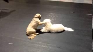 The Dog's Garage: Munchkin Likes Koda