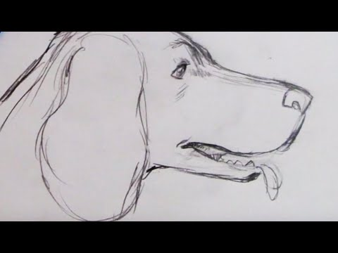 How to Draw a Dog - Spaniel (Step by Step)