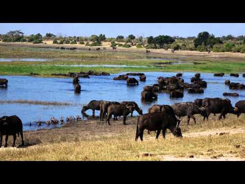 Botswana Zimbabwe July 2014 HD 1080p