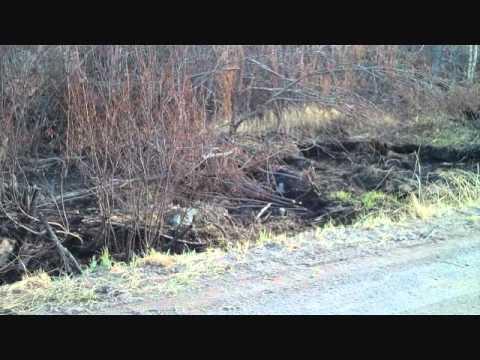 Pagami Creek Fire impact near Island River