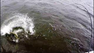 Голодные Щуки Атакуют Приманки в Жару. Рыбалка на Спиннинг. Джиг