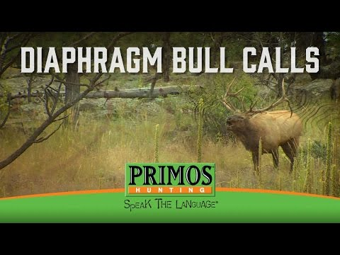 How to Make Bull Elk Sounds on a Diaphragm Call