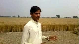 Interview of Minhala Farmers from Pakistan