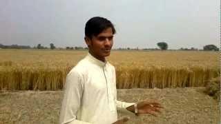 Interview of Minhala Farmers from Pakistan