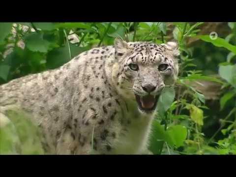 Folge 4  Staffel 5  Nashorn, Zebra & Co.  Folge 120  Ein Ameisenbär auf Eiersuche NoHD