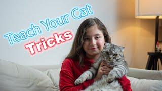 How to train your cat some tricks!!