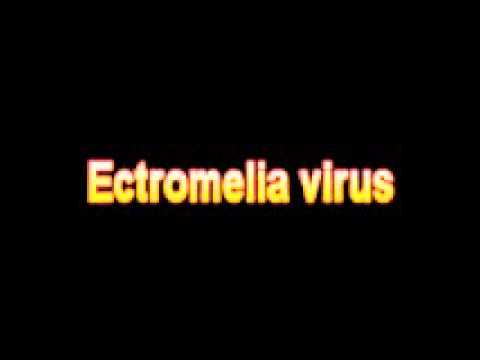 What Is The Definition Of Ectromelia virus - Medical Dictionary Free Online