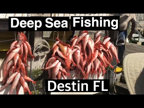 Destin Florida Swoop Deep Sea Fishing Charter  True Southern Accent