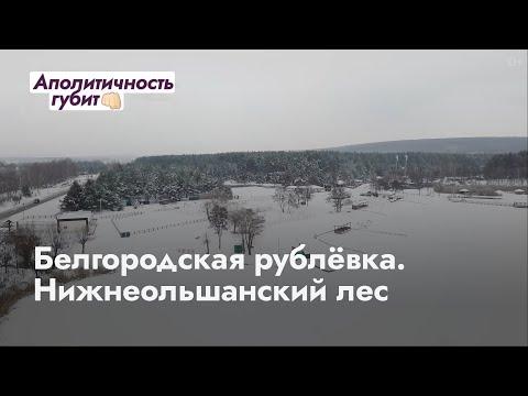Белгородская рублёвка. Нижнеольшанский лес