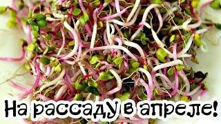 Что посадить из овощей на рассаду в апреле? Что посеять на рассаду в апреле дома?