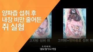 양파즙 섭취 후 내장 비만 줄어든 쥐 실험 - (201…