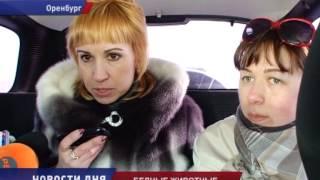 СВАЛКА ТРУПОВ ЖИВОТНЫХ ОБЕСКУРАЖИЛА ВОЛОНТЕРОВ