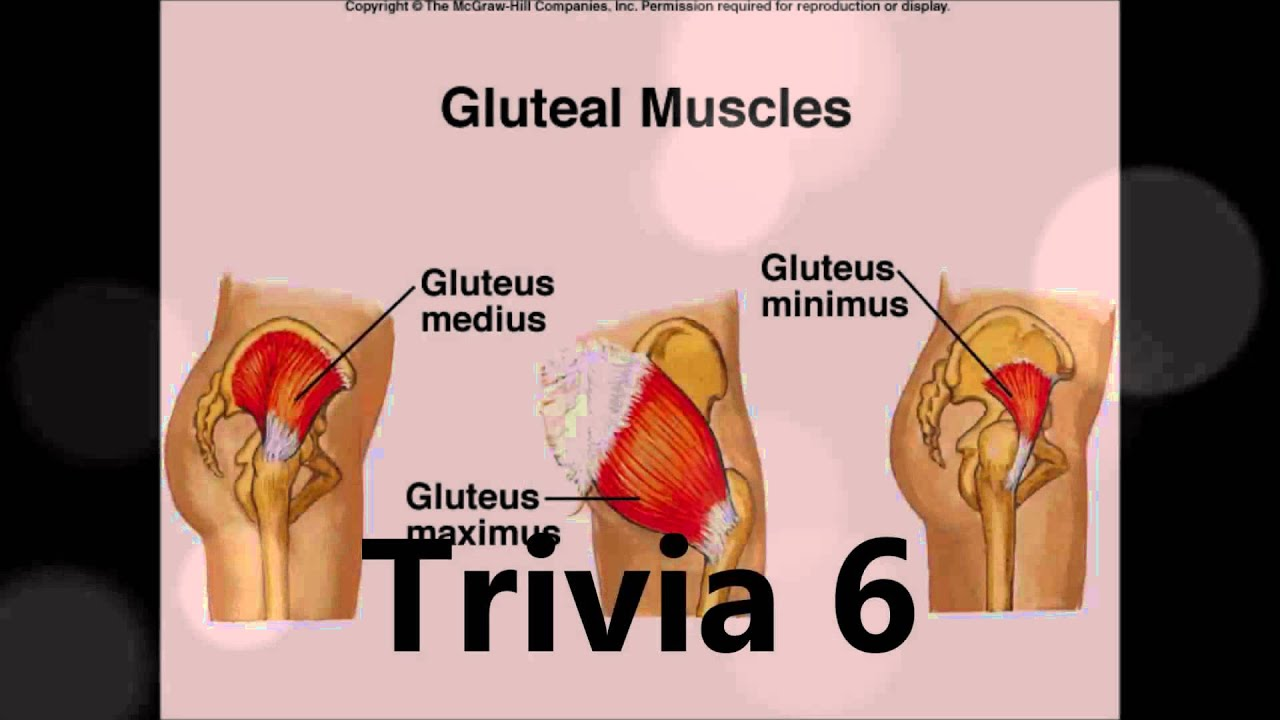 Muscular System Trivia - YouTube