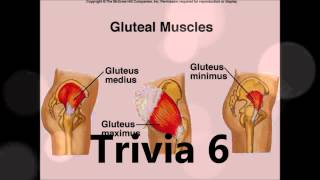 Muscular System Trivia