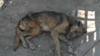 Perros callejeros ( La soledad y el Abandono )