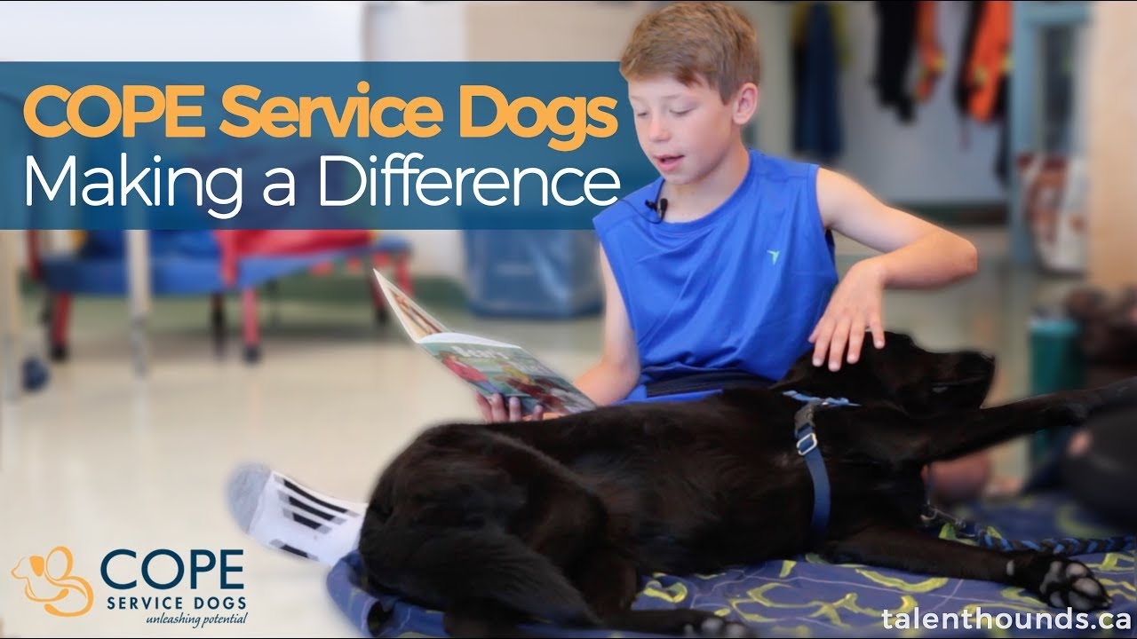 Watch How These Service Dogs From Cope