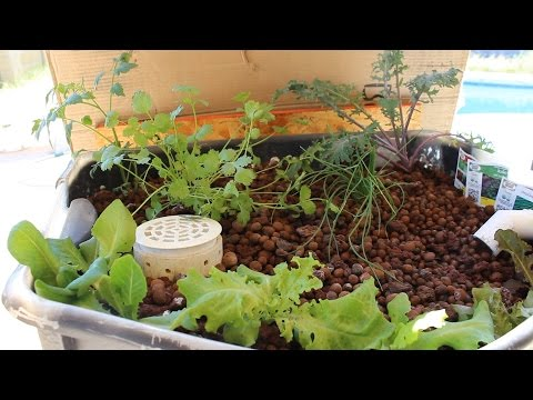 Aquaponics in the Backyard - Plants Added