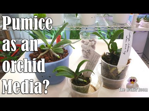Pumice Trial In Semi-Hydro: Finding A Better Orchid Media!