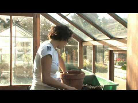 Hướng dẫn gieo hạt giống