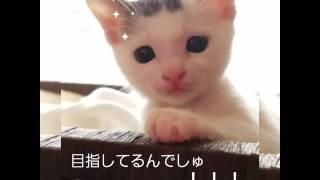 ついついママを呼んじゃう可愛い子猫の豆大福くんです。 目の前にいますよーーー.