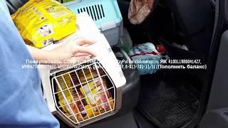 Делаем мир добрее вместе Приют для бездомных животных Дари добро Новосибирск новости