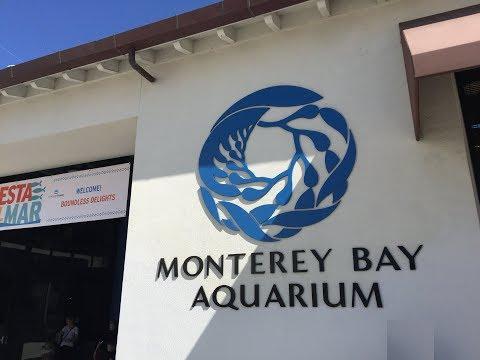Monterey Bay Aquarium Trip 10/15/2017