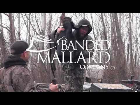 Banded Mallard Duck Hunting Public Land In Arkansas 2019-20 Duck Season