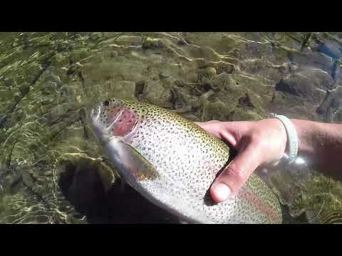 Truckee River Fishing- - -Rainbow Trout