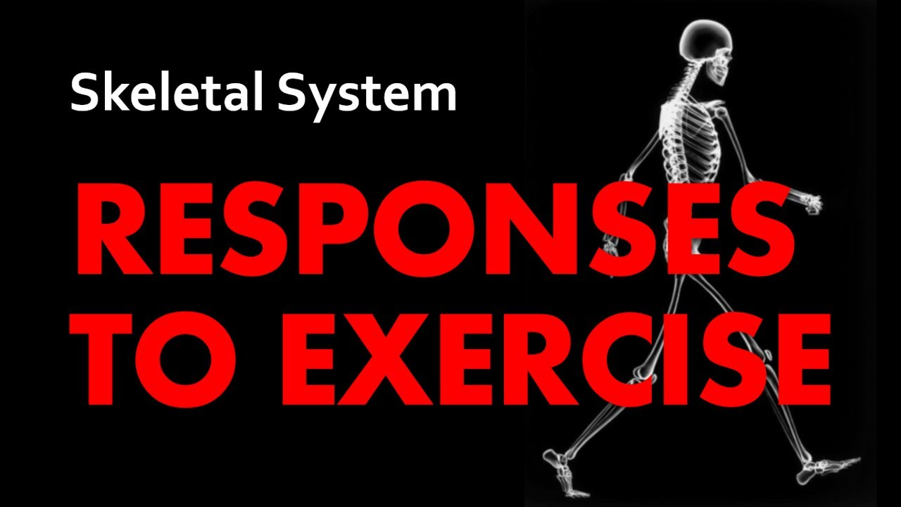 A&P Skeletal System 06 - Responses to Exercise - YouTube