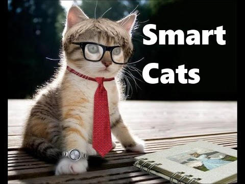 TOP 10 SMARTEST CATS VERY INTELLIGENT TRY NOT TO LAUGH MUST WATCH