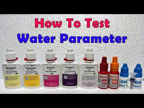 Neocaridina Shrimp Tank Part 2 - How To Test Water Parameter