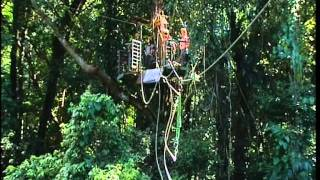 Jungle Surfing - Daintree Style Thumbnail