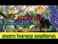 Suara Masteran Burung Spesial Tembakan Rapat  Mp3 - Mp4 Download