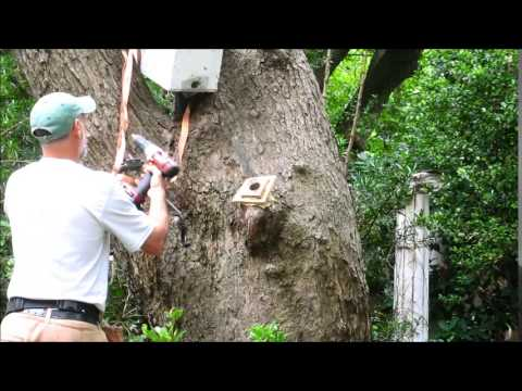 Bee Tree - DIY Trapout Followup - Completed