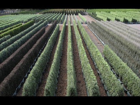 Twining Valley Nurseries - Instant Hedges